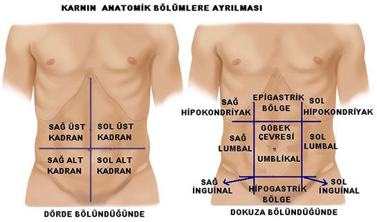 Vücudun ağrı haritası